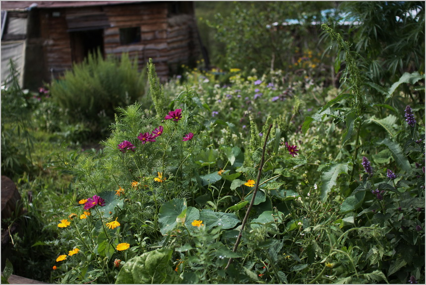 Experience in the usage of tall hilly garden beds (kugel-kultur)