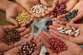 Как собрать семена самых основных культур?